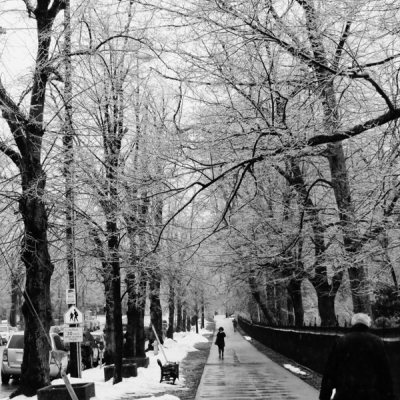 Avenue of Freezing Rain 4874